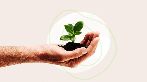 Umweltbewusstsein leben