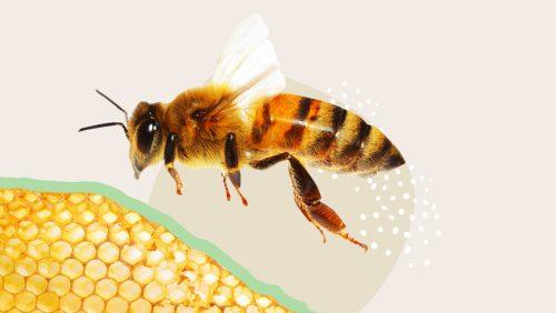 Bienen bei Bauer